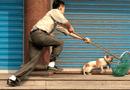 """Phạt vì thả rông chó: Có tránh được """"lối mòn"""" của những văn bản """"bất khả thi""""?"""