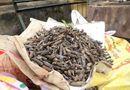Tin trong nước - Hưng Yên: Phát hiện 2 tấn đầu đạn trong vườn nhà dân