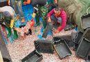 Tin tức - Ngư dân trúng đậm 200 tấn cá cơm ngày giáp Tết