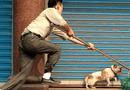 Tin tức - Trộm chó bị người dân truy đuổi, tóm gọn trên quốc lộ 1A