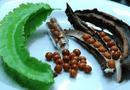 Bài thuốc chữa đau dạ dày từ đậu rồng