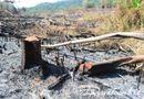 Tin tức - Bắt khẩn cấp Phó trạm trưởng Trạm bảo vệ rừng vì nhận hối lộ