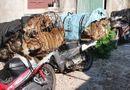 Tin tức - Cảnh sát hình sự chặt đứt đường dây trộm chó chuyên nghiệp, thủ sẵn hung khí để chống trả