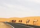 Các nhà khoa học Trung Quốc đã biến sa mạc ở Dubai thành đồng lúa như thế nào?