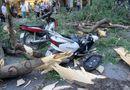 Tin tức - Hà Nội: Cây cổ thụ bỗng đổ kinh hoàng, xe đè bẹp, 5 người bị thương