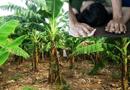 """Tin trong nước - Hà Nội: Bé gái 9 tuổi """"tố"""" bị kẻ lạ mặt kéo vào vườn chuối xâm hại trên đường đi học về"""