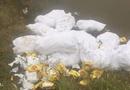 Vụ hơn 700kg ma túy đá bỏ bên đường ở Nghệ An: Các nghi phạm khai gì?