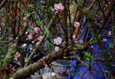Tin trong nước - Dự báo thời tiết đêm giao thừa Tết Nguyên đán Ất Mùi 2015