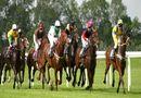 Thị trường - Đại gia xây trường đua ngựa trăm triệu USD: Hệ lụy khó lường