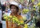 Tin trong nước - Hoa Tết ế ẩm, người bán hoa khóc ròng