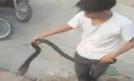 Video: Người đàn ông bắt ổ rắn hổ mang bằng tay không ở Hà Nội