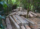 Tài nguyên - Tiếng kêu cứu của rừng xanh từ đại ngàn Quảng Nam