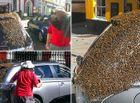 Cộng đồng mạng - 20.000 con ong chạy theo ô tô để giải cứu ong chúa