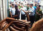 An ninh - Hình sự - Phát hiện hơn 2 tấn nghi ngà voi ngụy trang trong thân gỗ