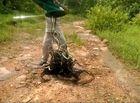 Cộng đồng mạng - Rợn người cảnh thả hàng trăm con rắn vào rừng