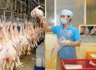 Thị trường - Thịt gà Việt Nam sẽ xuất khẩu sang Nhật Bản, EU trong năm 2017
