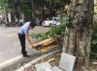 Tin trong nước - Hà Nội: Cây xanh bất ngờ đổ gục, hàng chục người đứng chờ đèn đỏ thoát nạn