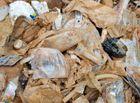 Tin trong nước - Cán bộ xã xin rác y tế về ủ trong vườn, đầu nguồn nước
