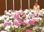 Cộng đồng mạng - Suýt ngồi tù vì đổi nhầm cây hoa cực hiếm