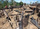 Tin trong nước - Vụ phá rừng Quảng Nam: Đứng sau phải có chủ mưu, phải là người có tiền, có trình độ!