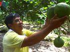 Tin tức - Nông dân nghèo nhất xóm thu nhập 5 tỷ đồng mỗi năm nhờ trồng bưởi da xanh