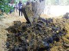 Tin tức - Phạt Formosa 510 triệu đồng về hành vi chôn chất thải độc hại trong trang trại