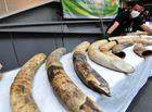 Tin thế giới - Trùm buôn lậu gốc Việt buôn bán động vật hoang dã bị tóm tại Thái Lan