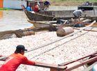 Tin tức - Vụ 1.500 tấn cá chết ở Đồng Nai: Xác định nguyên nhân ban đầu