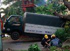 Tin tức - Gió lốc mạnh quét qua Sài Gòn, hàng loạt cây to gãy đổ