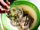Tin tức - Phát hiện 2 cơ sở kinh doanh bơm tạp chất vào tôm ở Sầm Sơn