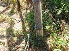 Tin tức - Vụ đôi vợ chồng bị điện giật ở vườn chuối: Giám đốc điện lực nói không liên quan