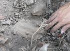 Tin trong nước - Vụ hơn 300 xác thai nhi bị bỏ theo rác thải ở Cà Mau: Lời kể xót xa của người liệm thi hài