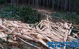 Vụ tranh chấp đất rừng: Hai bìa đỏ trên một mảnh đất