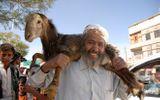 Những lễ hội giết động vật rùng rợn trên thế giới