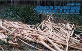 Vụ tranh chấp đất rừng: Người dân khát khao một mảnh đất sản xuất