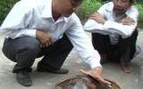 Rùa biển quý hiếm sa lưới ngư dân phá Tam Giang