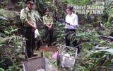 Thả 8 cá thể động vật quý hiếm bị người dân bắt về rừng tự nhiên