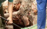 Hà Nội chặt 6.700 cây xanh: GS Ngô Bảo Châu lên tiếng