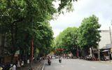 Có hay không chuyện chặt 3.500 cây xanh ở Huế?