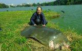 Sự thực tin đồn cụ rùa Hồ Gươm qua đời