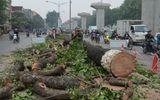 Vụ chặt cây xanh: Phó Thủ tướng yêu cầu khẩn trương thanh tra