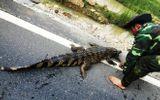 Cử đoàn xác minh nguồn gốc cá sấu trên quốc lộ 1