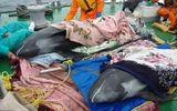 Cá heo chết trước sóng thần - sự trùng hợp ngẫu nhiên?
