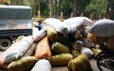 Bí ẩn thương lái Trung Quốc mua gom rêu đá với giá cao