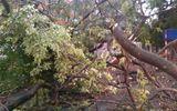 Mưa giông khiến ít nhất 1 người chết, hàng loạt cây xanh bật gốc