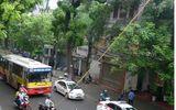 Cành cây bị gãy rơi trúng người đi đường tại Hà Nội