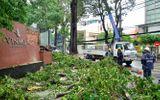 TP.HCM: Mưa giông khiến cây xanh gãy làm nhiều người bị thương