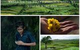 """""""Tôi thấy hoa vàng trên cỏ xanh"""" nhận giải Phim hay nhất tại LHP Quốc tế"""