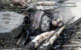 Hai trẻ tử vong sau khi ăn cá lóc nướng tại tỉnh Đồng Tháp