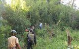 Cuộc trốn chạy trong rừng của nhóm cướp taxi ở Lâm Đồng